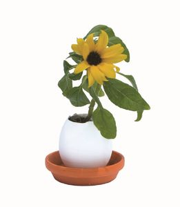 Grow Your Own Cactus/Sunflower/Strawberry In An Egg