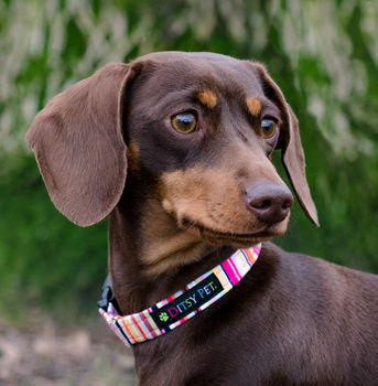 Padstow Deckchair Stripe Dog Collar