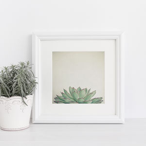 Echeveria Botanical Photographic Print