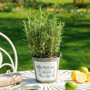 Herbes De Jardin Metal Planter Bucket