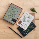 Box Of Eight Botanical Christmas Cards, Species