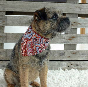 Rokabone Paisley Dog Bandana | Blue And Orange - clothes & accessories
