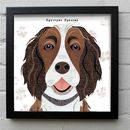 Liver And White Springer Spaniel Print