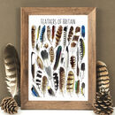Feathers Of Britain Wildlife Watercolour Print