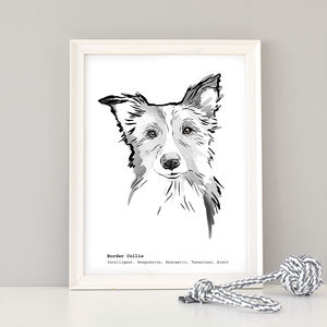 Border Collie Dog Breed Print - animals & wildlife