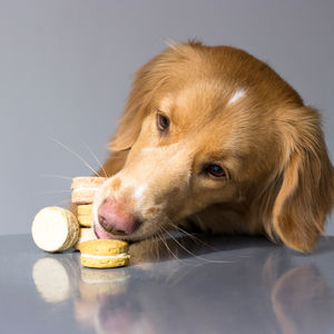 Dog Macaroon Treats - dogs