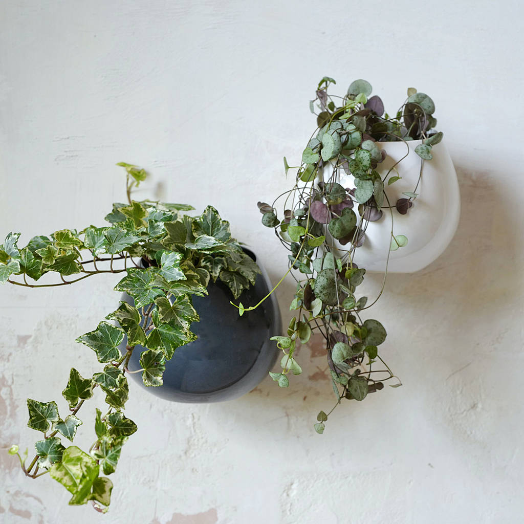 Ceramic Wall Hanging Plant Pot