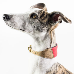 Personalised Cork And Felt Greyhound Dog Collar - dog collars