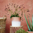 White And Terracotta Plant Pot