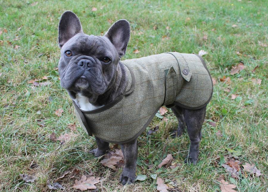 French Bulldog Dog Coat By Country And Twee