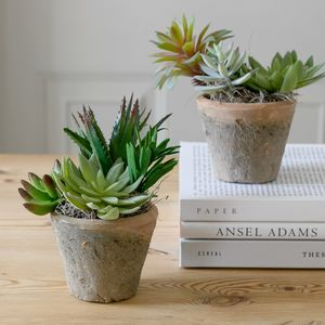 The Botanist Faux Mixed Succulent Moss Pot - the greenhouse edit
