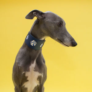 Geo Hound Collars And Lead Set - what's new