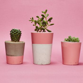 Pink Concrete Plant Pot With Cactus Or Succulent