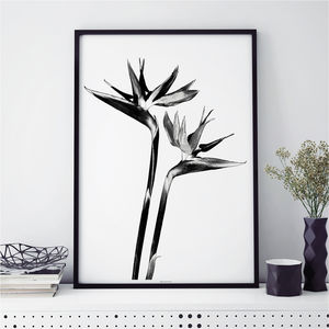 Botanical Art Print 'Bird Of Paradise' - still life