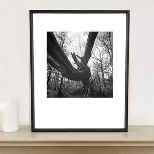 Fallen Tree, Thornham Walks Photographic Art Print