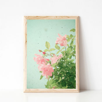 Pink Roses Photographic Flower Print