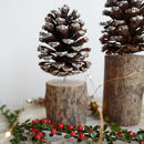 Pine Cone On A Stand