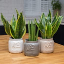 Maison Jar Style Ceramic Plant Pot / Planter