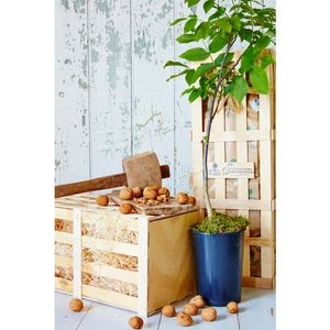 Walnut Tree Gift - what's new