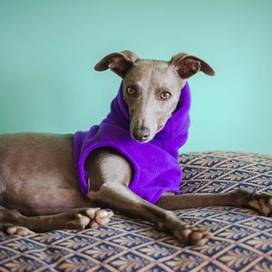 Fleecy Snood For Whippets - pet clothes & accessories