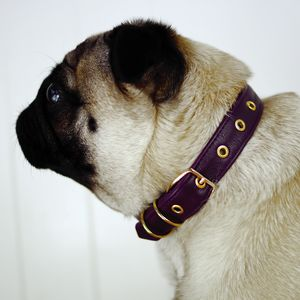 Deluxe Leather Dog Collar - dog collars