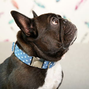 Denim Hearts Dog Collar - dogs