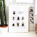 Illustrated British Bees Springtime Print