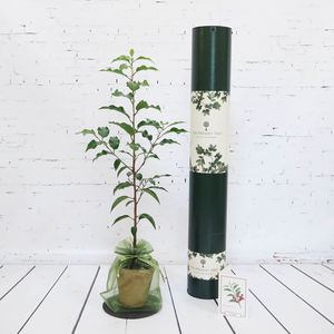 Flowering Cherry Tree Gift - 21st birthday gifts