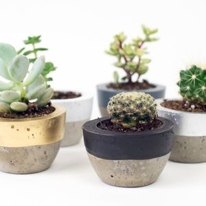 Colour Block Mini Concrete Plant Pot - gardening