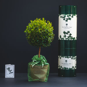 Myrtle Tree Of Love Gift - flowers, plants & vases