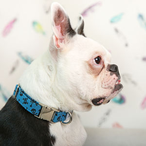 Pirate Pattern Dog Collar - more