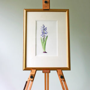 Hyacinth Original Botanical Watercolour
