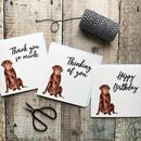 Luxury Labrador Occasion Card Collection
