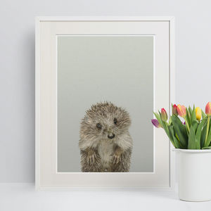 Nursery Print Peekaboo Woodland Hedgehog - animals & wildlife