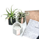 Mix It! Concrete Copper Air Plant Holder Set