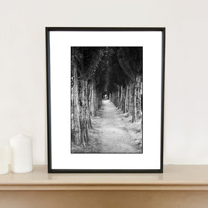 Treeline, Honfleur, France, Art Print - photography & portraits