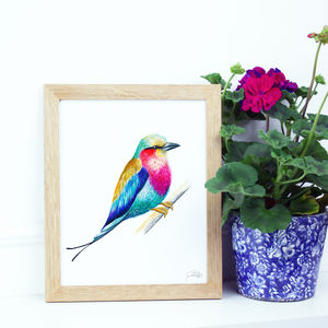 African Lilac Breasted Roller Illustration Print - shop by price