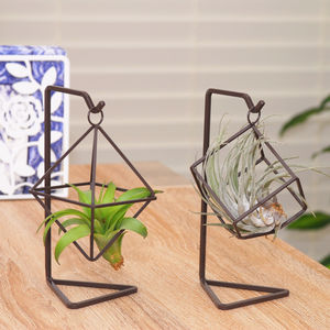 Gemetric Hanging Air Plant Terrarium