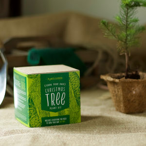 Grown Your Own Christmas Tree Kit - gardening