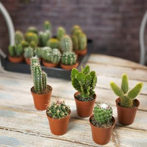 Cactus House Plant Mix - gifts for him