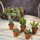 Cactus House Plant Mix