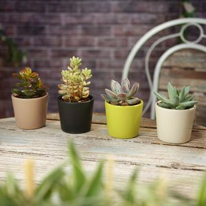 Succulent House Plant Mix With Decorative Pots - housewarming gifts