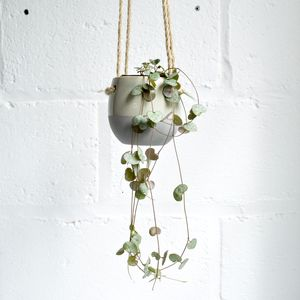 Hanging Planter With String Of Hearts Plant
