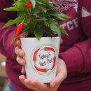 Personalised Ring Of Fire Chilli Plant Pot With Seeds
