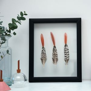 Framed Lady Amherst Pheasant Feathers