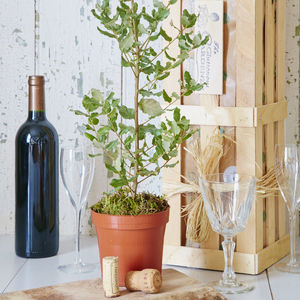 Grow Your Own Cork Oak - personalised wedding gifts