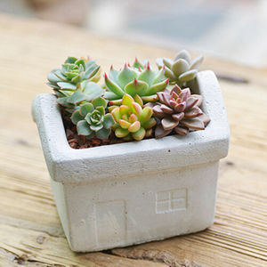 Concrete House Planter - housewarming gifts