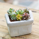 Concrete House Planter