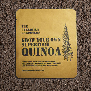 Grow Your Own Quinoa Kit - gardening