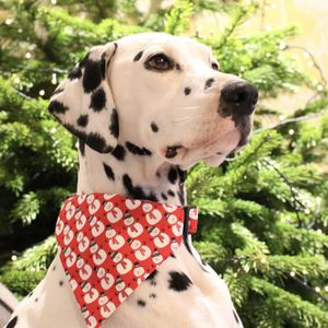 Frosty The Snowman Bandana - clothes & accessories